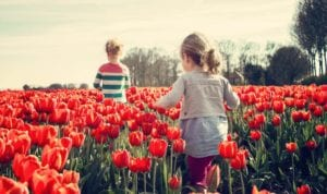 Two young girls walk through a field of red tulips